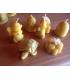 Bougie abeille, ruche ou bougie flottante fleur