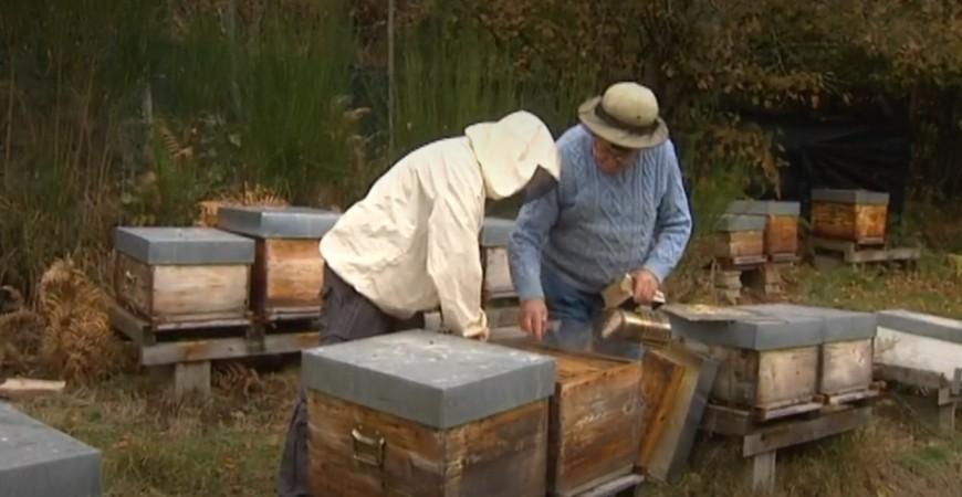 France 3 : cultiver le miel à fleur de volcan, une profession qui évolue